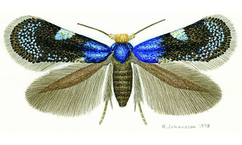 How pygmy moths started to diversify 100 million years ago
