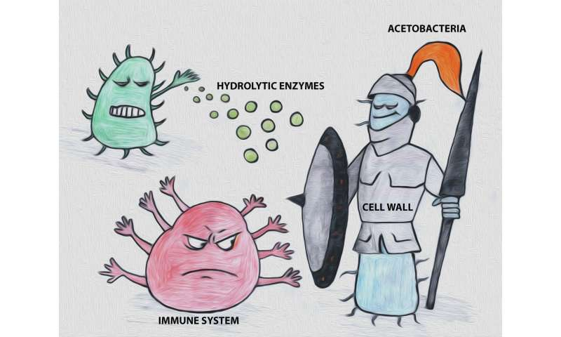 How the bacterial protective shell is adapted to challenging environments