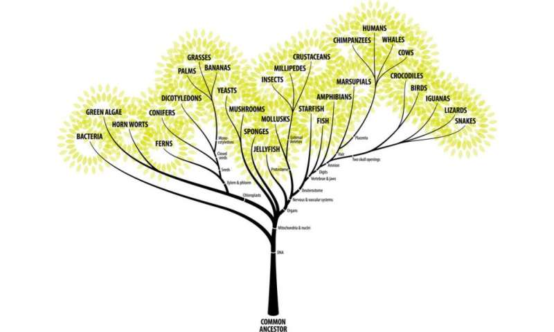 How to grow an evolutionary tree