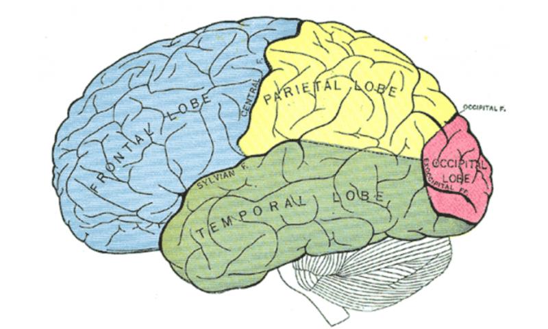 How your brain retrieves a memory when you sense something familiar