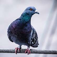 Humans could learn something from pigeons to improve their efficiency