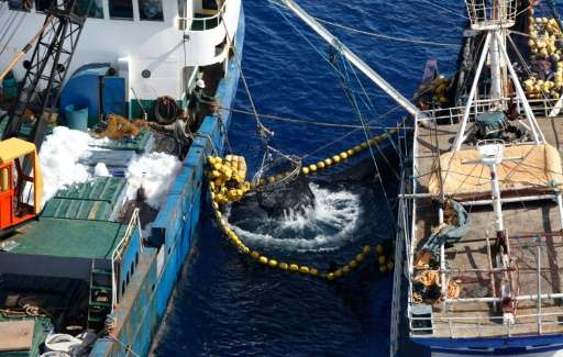 """Illegal tuna fishing in the Pacific has reached a """"staggering"""" value of up to 740 USD million a year"""