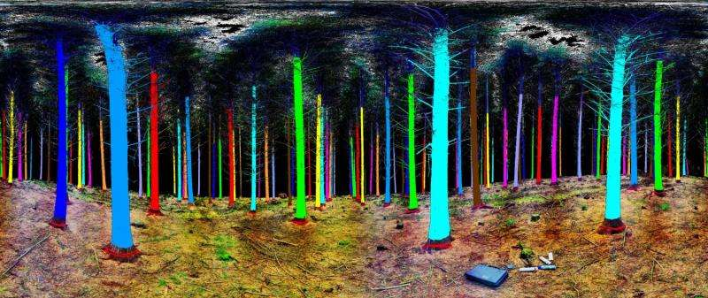 Image: Treemetrics woodland laser scan