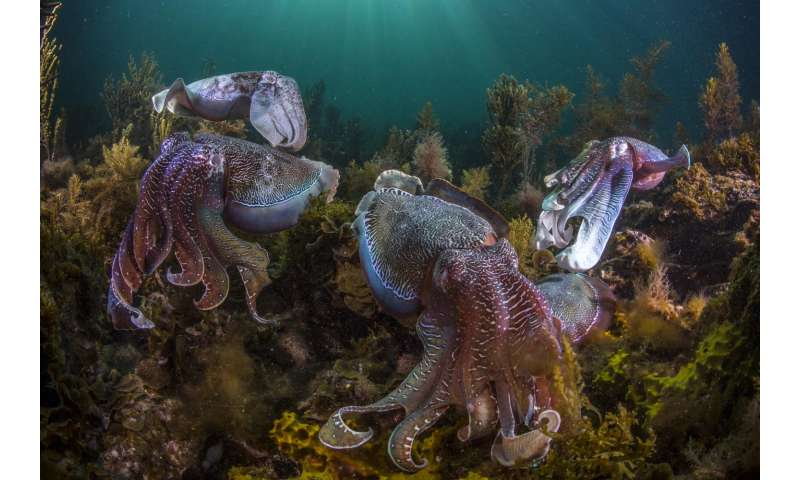 In changing oceans, cephalopods are booming