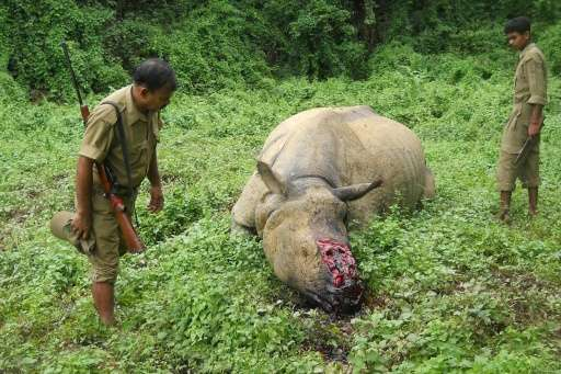 Indian forestry officials stand near the carcass of a rhinoceros that was killed and de-horned by poachers in the Kaziranga Nati