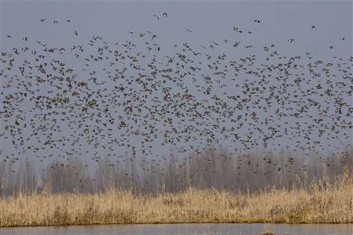 Indian Kashmir begins bird census at Himalayan wetlands