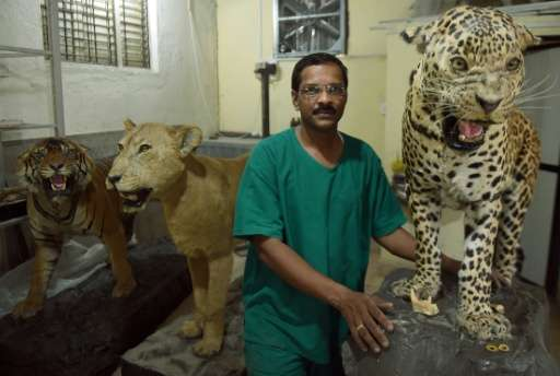India's last practising taxidermist Santosh Gaikwad stands in the taxidermy centre at the Sanjay Gandhi National park in Mumbai