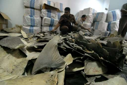 Indonesian customs and quarantine officials inspect shark fins seized at Jakarta airport, intended for shipment to Hong Kong