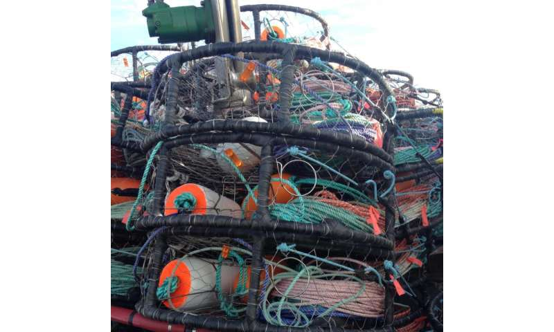 Injuries among Dungeness crab fishermen examined in new OSU study