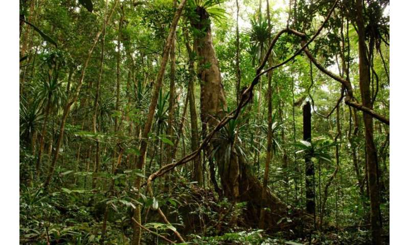 Intact nature offers best defense against climate change