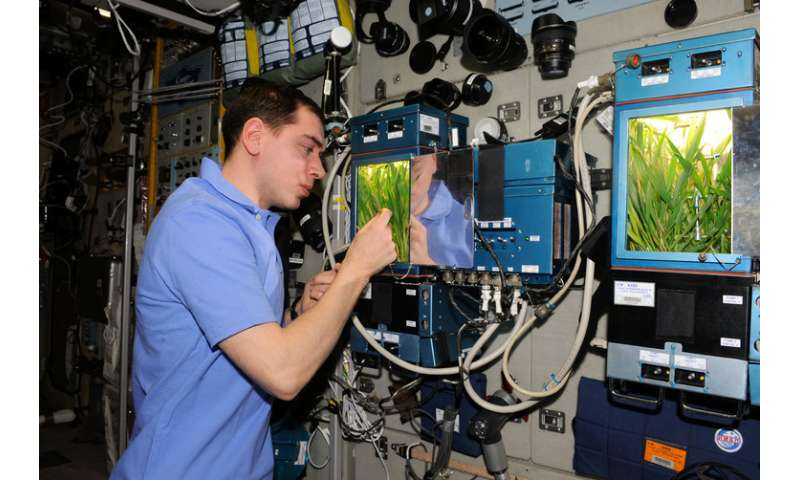 Interstellar greenhouses: how a single molecule could be key to growing plants in microgravity