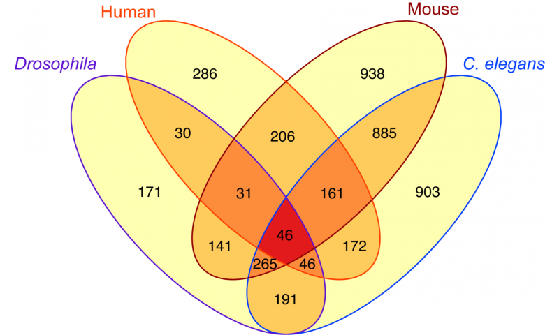 In wide range of species, longevity proteins affect dozens of the same genes