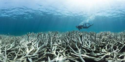 It is the third time in 18 years that the Great Barrier Reef, which teems with marine life,has experienced mass bleaching after