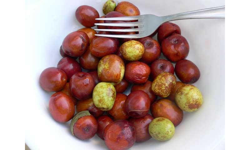 Pictures Of Jujube Fruit