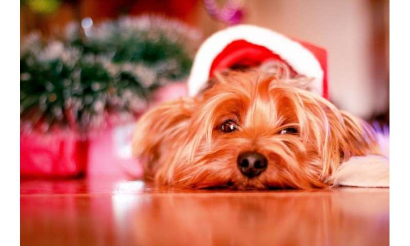 Keeping pets safe in the festive season
