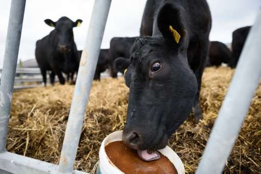 Lab studies revealed that dung pats from animals given a common antibiotic gave off more than double the methane, a potent green