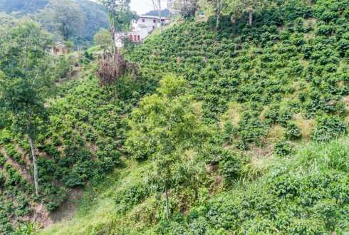 Largest global coffee initiative to cope with climate variability