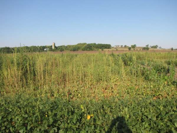 Left uncontrolled, weeds would cost billions in economic losses every year