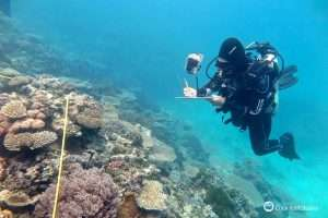 Life and death following Great Barrier Reef bleaching