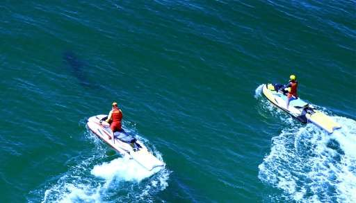 Lifeguards chase a shark away from Ballina's Lighthouse Beach following a shark attack that injured a 17-year-old surfer