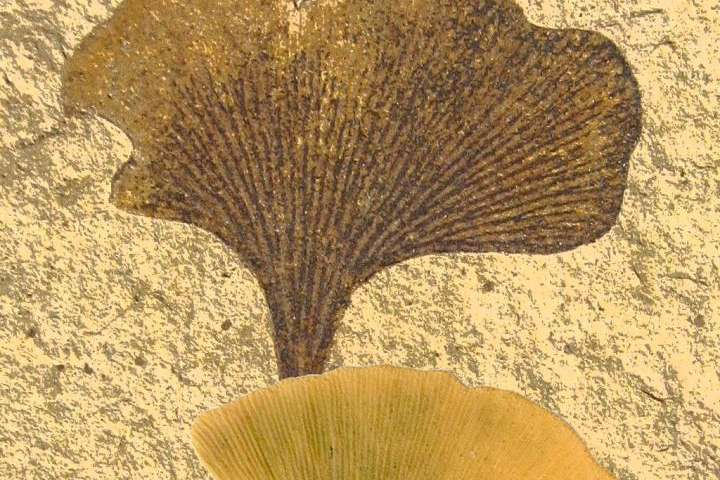 Living fossil genome unveiled