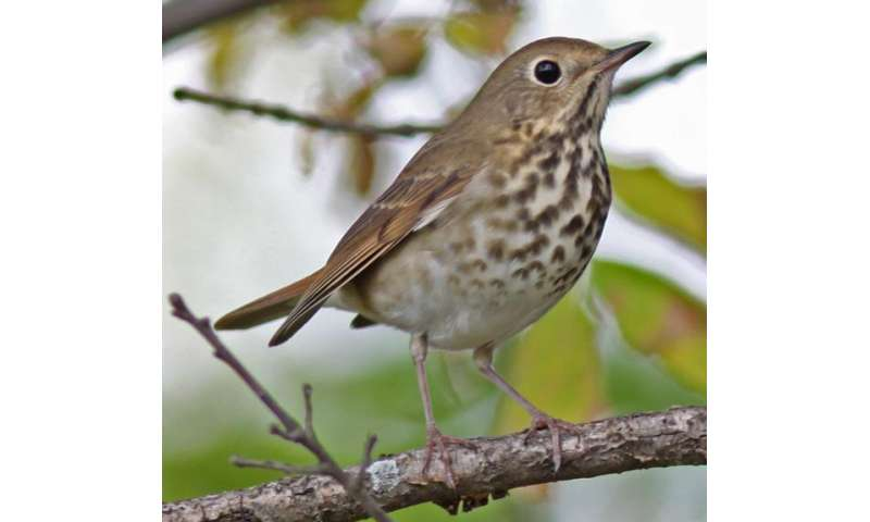 Longest study of Great Lakes region birds finds populations holding steady