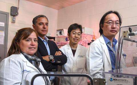 Low-oxygen environment leads to heart regeneration in mice, UTSW research shows