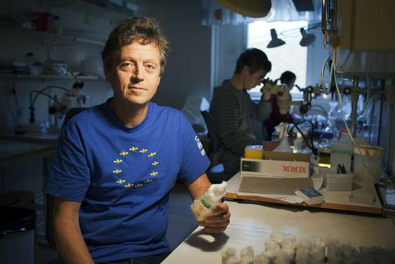Luminous proteins offer new method to discover viral infections