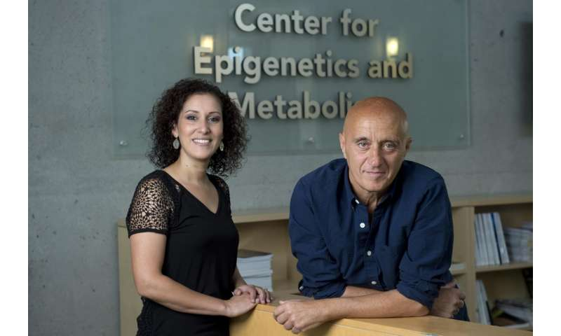 Lung tumors hijack metabolic processes in the liver, UCI study finds