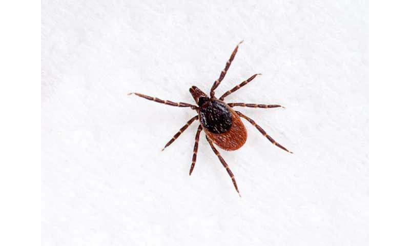 Lyme disease 'Biofilm' eludes antibiotics: report