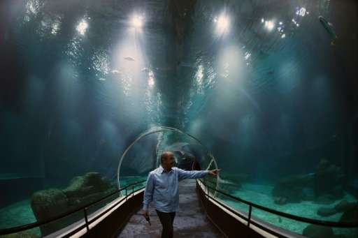 Marine biologist Marcelo Szpilman shows the glass tunnel at the entrance of the AguaRio aquarium in Rio de Janeiro on October 13