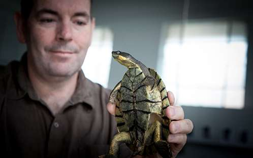 Mating season key as endangered turtles recover from mystery virus