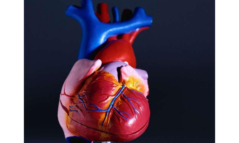 Meds don't cut trastuzumab-tied left ventricular remodeling