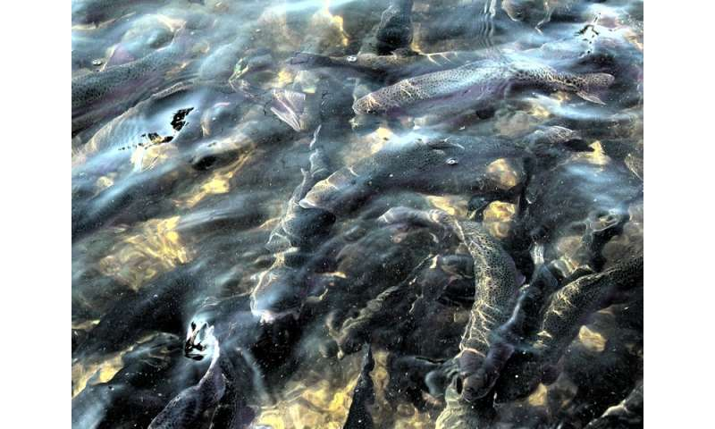 Mercury in fish affected by both prey type and quality for Fish and mercury