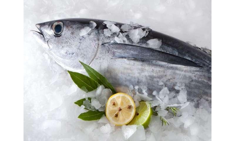 Mercury levels dropping in north atlantic tuna