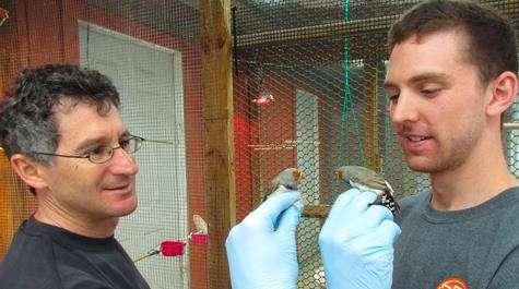 Mercury-ridden songbirds get an extra jolt during migration