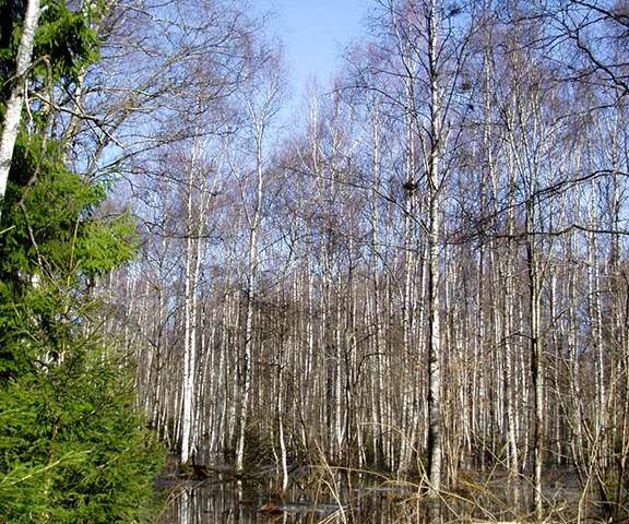 Microbial community dynamics dominate greenhouse gas production in thawing permafrost