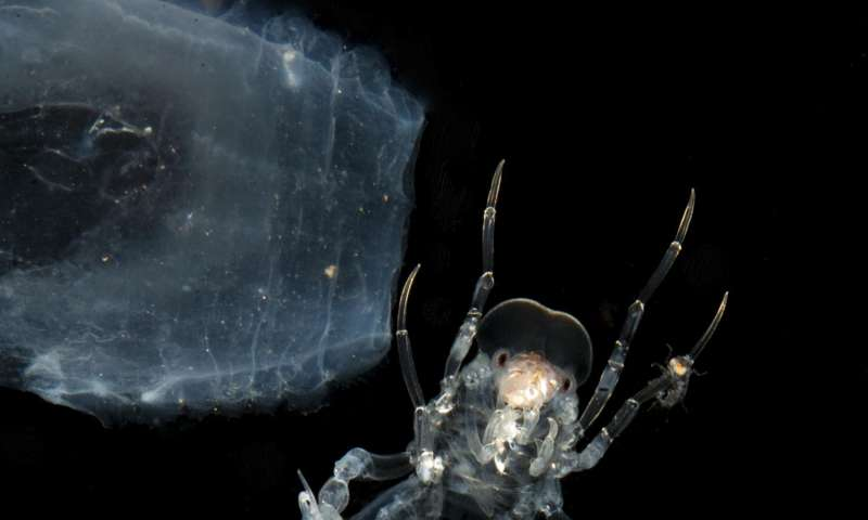 Midwater ocean creatures use nanotech camouflage