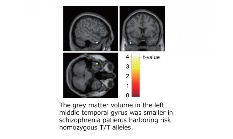 Molecular mechanism for higher brain functions and neuropsychiatric disorders