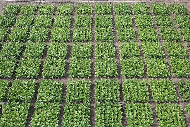 Molecular method promises to speed development of food crops