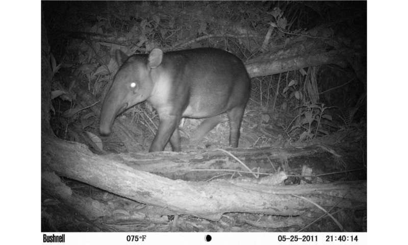 MSU part of team working to save endangered species in Nicaragua