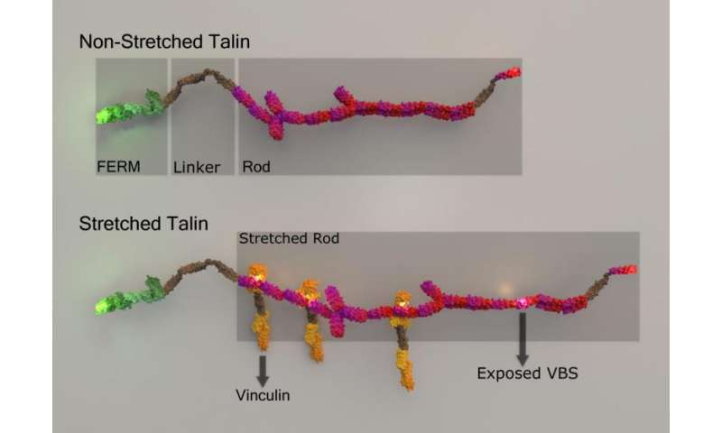 Multicolour super resolution imaging – A method to monitor dynamic protein binding at subsecond timescales