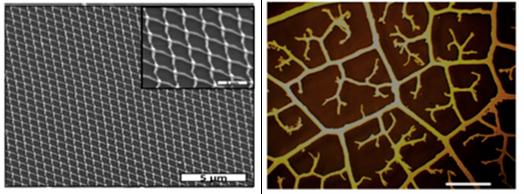 Nanotechnology for energy materials: Electrodes like leaf veins