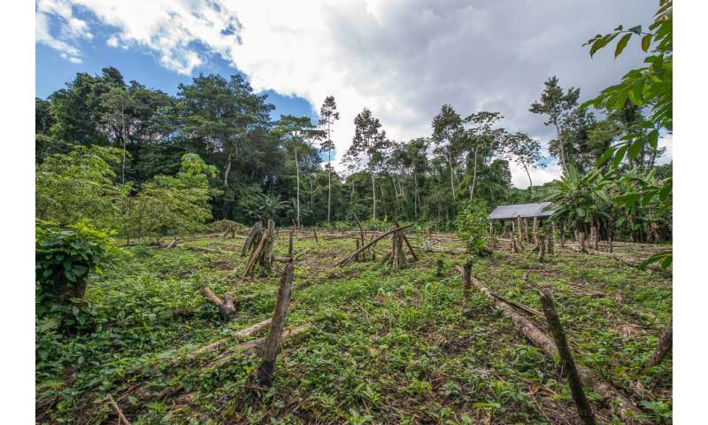 Natural regeneration may help protect tropical forests
