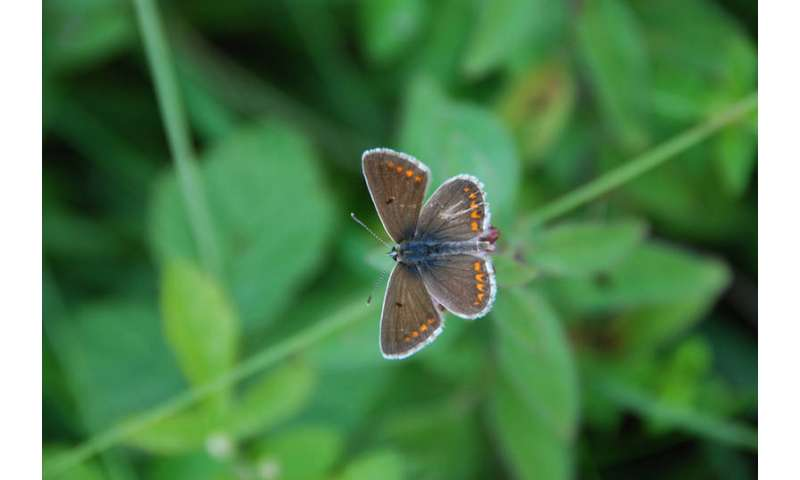 Nature conservation areas no haven for butterflies