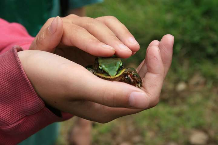 NC State study asks kids to choose wildlife conservation priorities