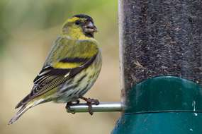 Nests near bird feeders are five times more likely to be predated, research shows