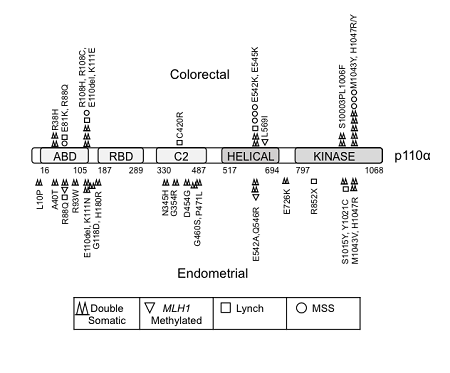 New cancer type with PIK3CA mutations