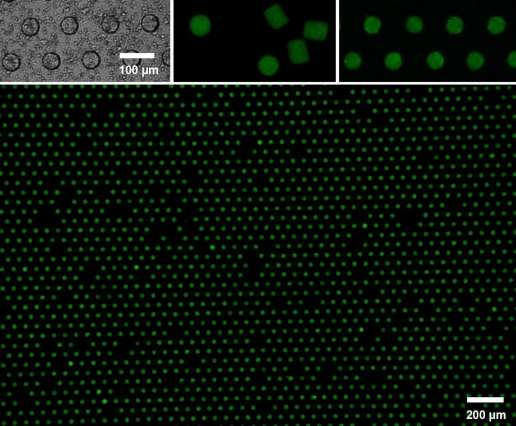 New design of large-scale microparticle arrays for bioengineering applications
