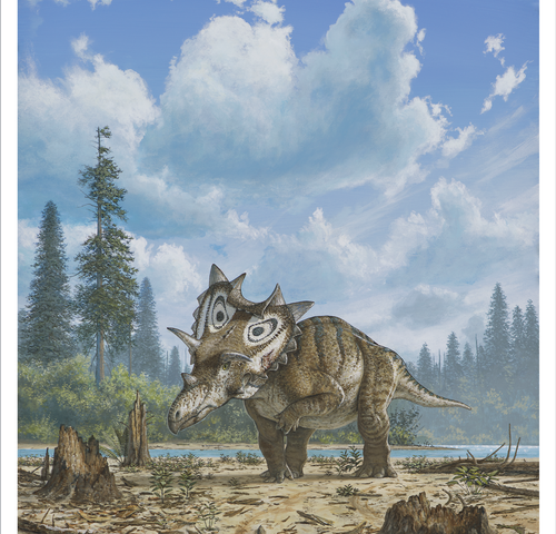 New horned dinosaur species with 'spiked shield' identified by Canadian Museum of Nature